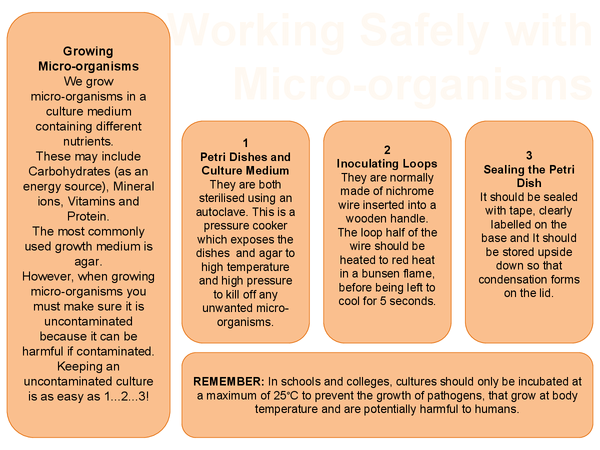 Preview of Biology - Working Safely with Micro-Organisms (poster)