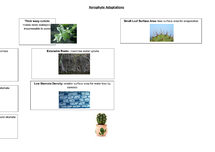 Preview of AQA Biology Unit 2: Xerophyte Adaptations
