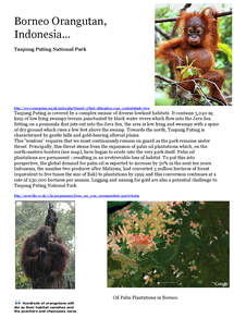 Preview of Borneo Orangutan