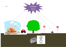Preview of Carbon Cycle