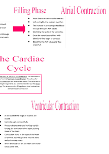 Preview of Cardiac Cycle
