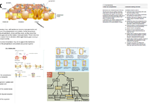 Preview of Cell membranes poster