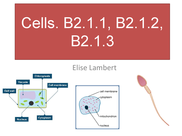 Preview of Cell revision.