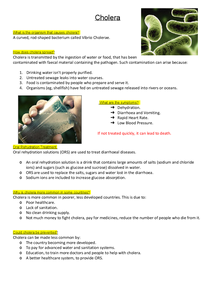 Preview of Cholera AQA Biology revision notes