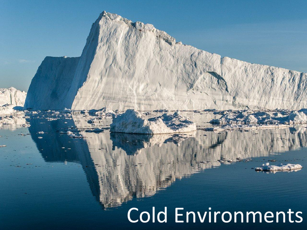 Preview of Cold Environments revision powerpoint