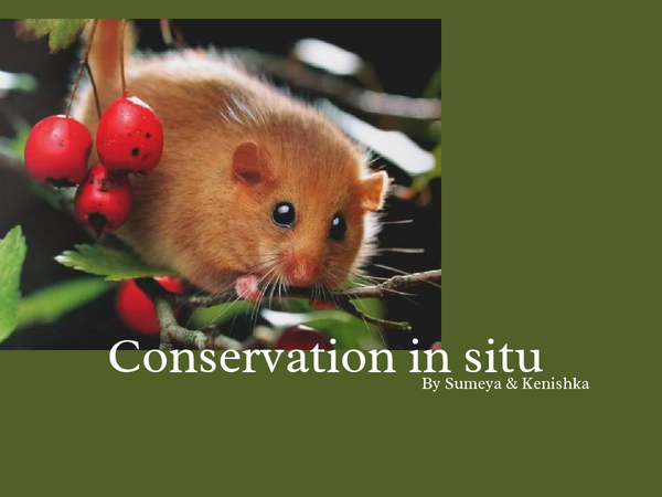 Preview of conservation in situ