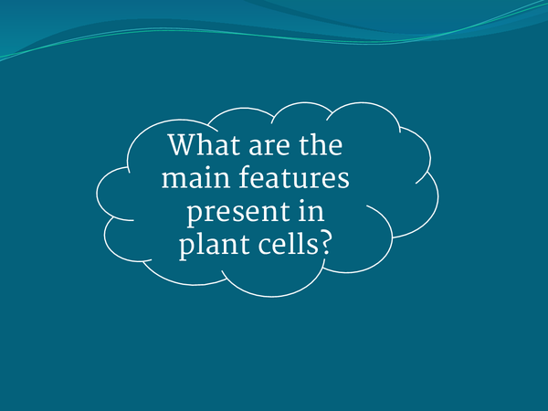 Preview of Difference between animal and plant cells