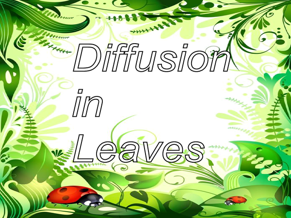 Preview of Diffusion In Leaves, Osmosis & Turgor Pressure