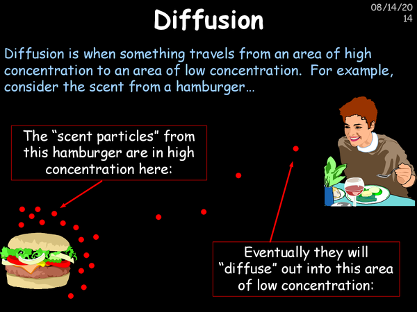 Preview of Diffusion, Osmosis And Active Transport