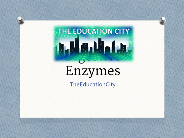 Preview of Digestive Enzymes