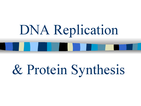 Preview of Dna replication and protein synthesis