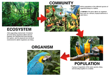 Preview of Ecosystems, communities, populations