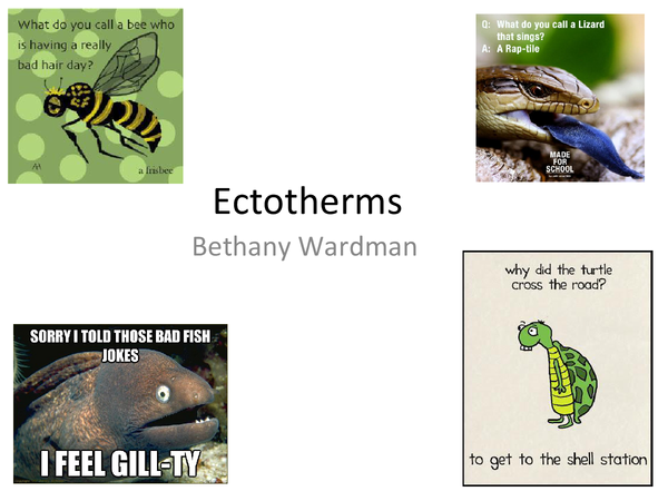 Preview of Ectotherms