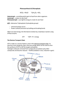 Preview of Edexcel A2 Biology Notes