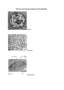 Preview of Electron microscope images of cell organelles