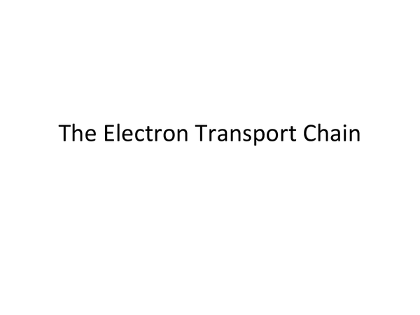 Preview of Electron transport Chain Power Point