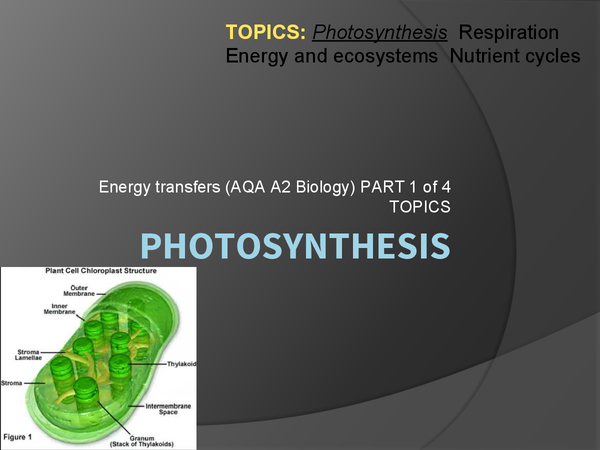 biology extended essay photosynthesis Extended essay – biology for lifebiology  sample extended essays in biology  next page photosynthesis wrk sheet your conclusion is.