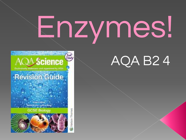 Preview of Enzymes B2 4