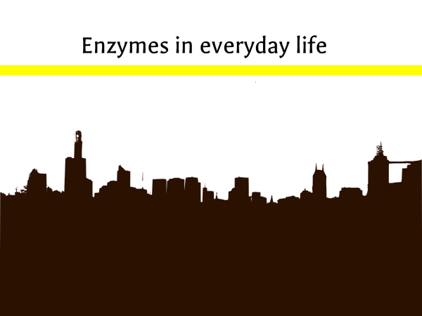 Preview of Enzymes in everyday life