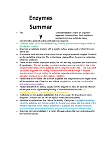 Preview of Enzymes Summary