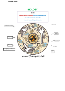 Preview of Eukaryotic Cell Diagram (With Labels)
