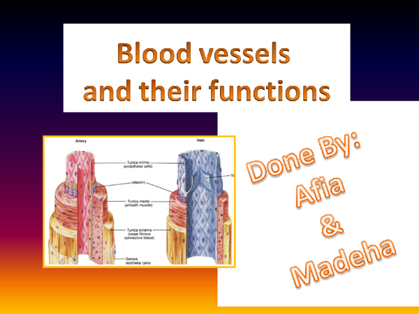 Preview of Exchange and transport-blood vessels and their functions