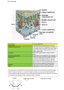 Preview of exchange of materials in plants- B2