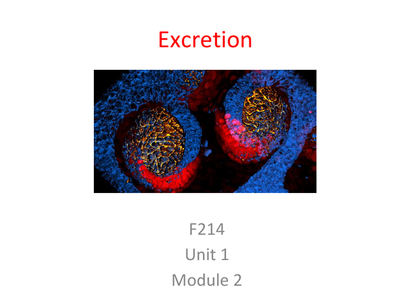 Preview of Excretion Unit 1 Module 2 Revision