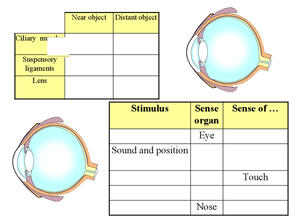 Preview of Eye Drawings