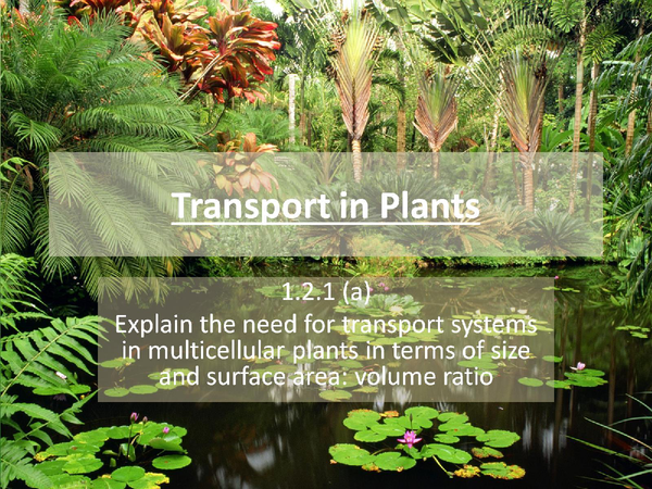 Preview of F211: Transport in plants (specification point A)
