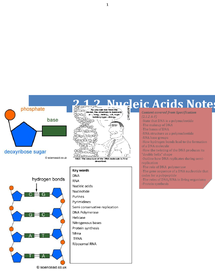 Preview of F212 Nucleic acids complete notes booklet