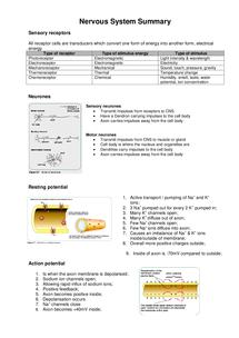 Preview of F214 OCR Biology: Nerves