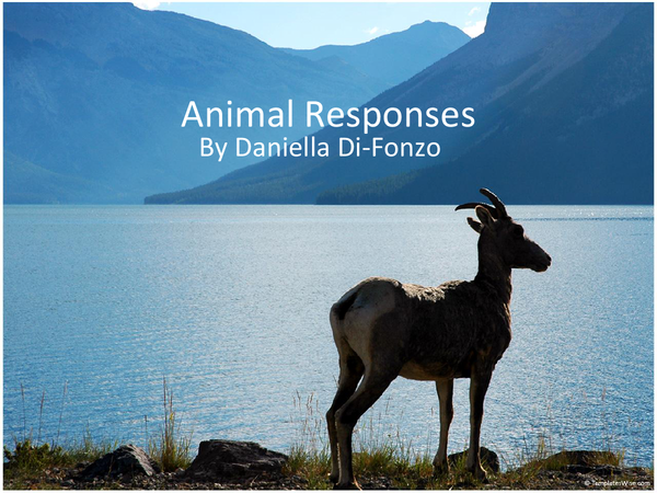 Preview of f215 animal responses (2008 speo)