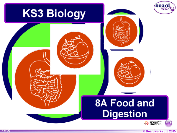 Preview of Food and digestion