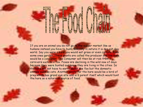 Preview of Food Chain Power Point