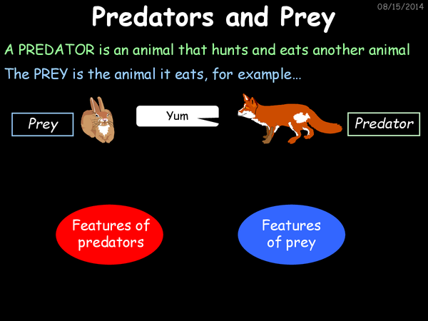 Preview of Food Chains PowerPoint