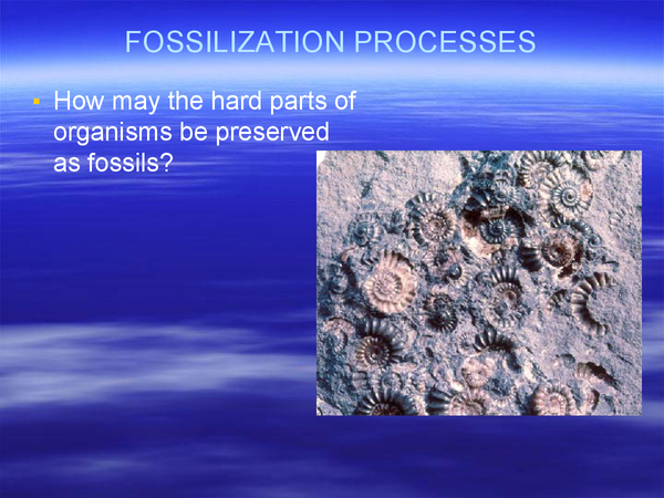 Preview of FOSSILIZATION
