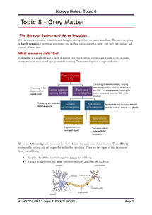 Preview of Full set of notes on NERVOUS SYSTEM -A2 biology unit 5 for edexcel-