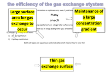 Preview of gas exchange