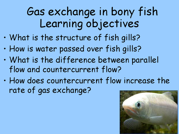 Preview of Gas Exchange in Bony Fish