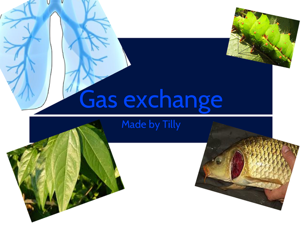 Preview of Gas-exchange in different organisms