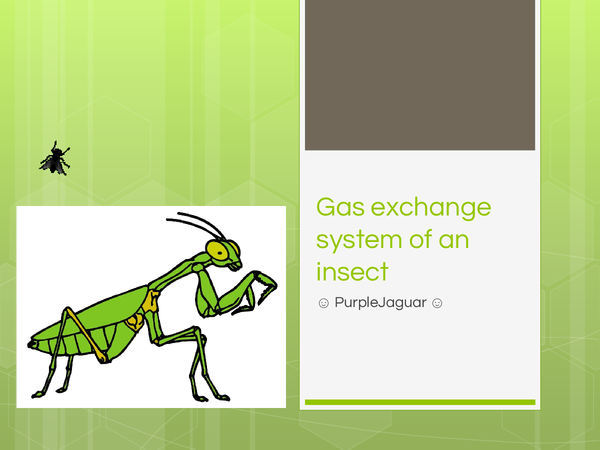 Preview of Gas exchange system in insects