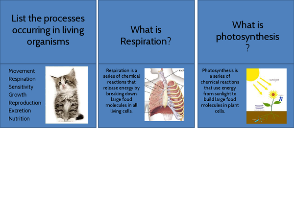 Gcse biology b4 ocr 21st century science printable revision cards gcse biology b4 ocr 21st century science printable revision cards publicscrutiny Gallery