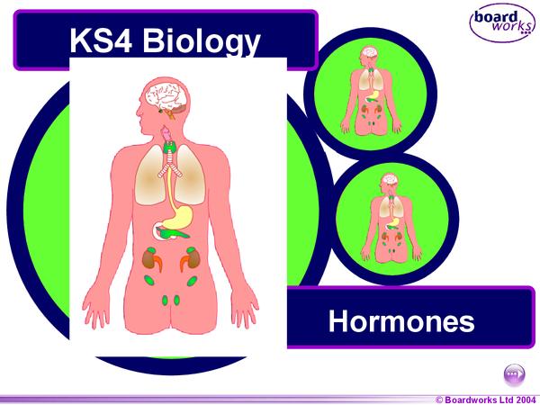 Preview of GCSE Biology - Hormones