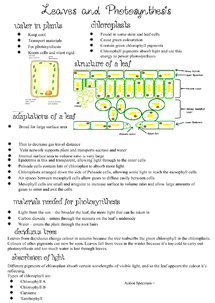 Preview of GCSE Biology - Leaves and Photosynthesis