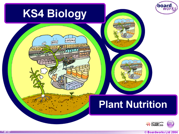 Preview of GCSE Biology - Plant Nutritions