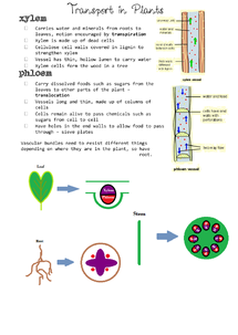 Preview of GCSE Biology - Transport in Plants