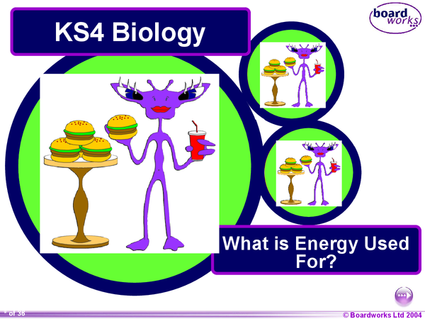 Preview of GCSE Biology - What is energy used for?