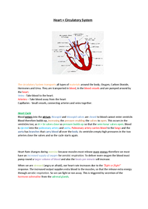 Preview of GCSE EDEXCEL BIOLOGY HEART AND CIRCULATION