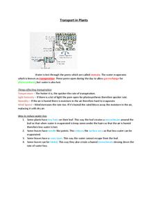 Preview of GCSE EDEXCEL BIOLOGY TRANSPORT IN PLANTS